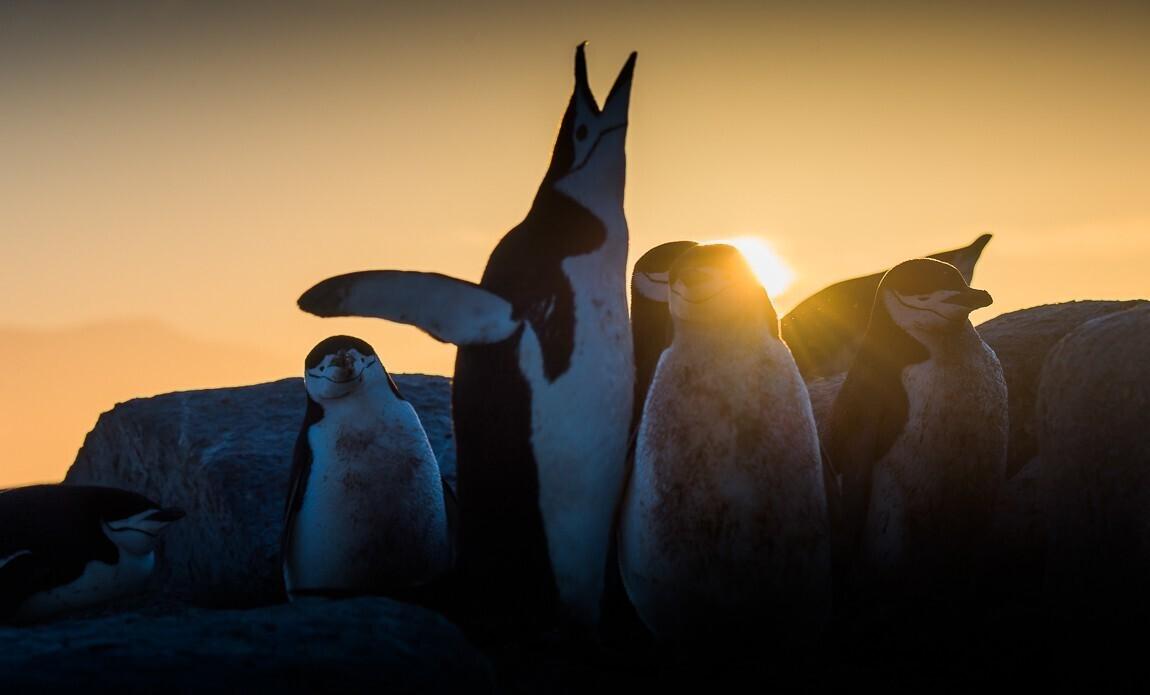 expedition photo antarctique benoist clouet galerie 1