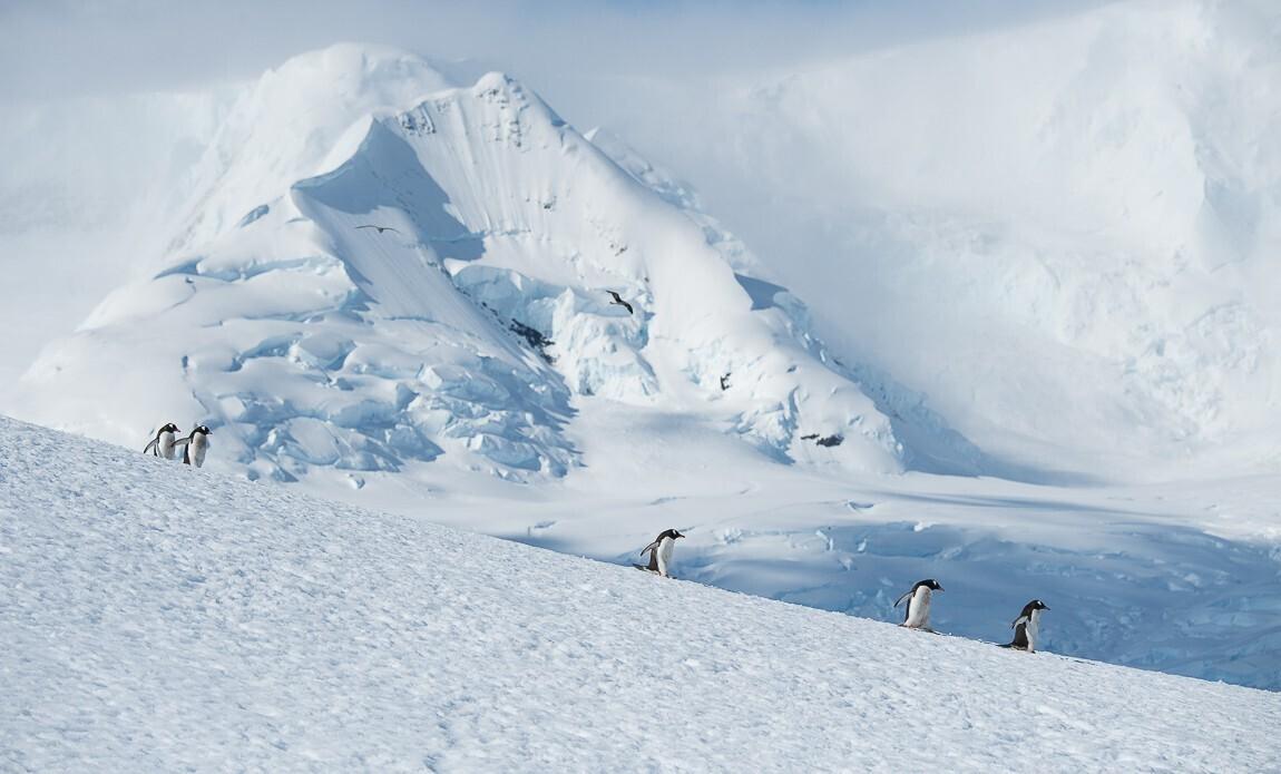 expedition photo antarctique benoist clouet galerie 10