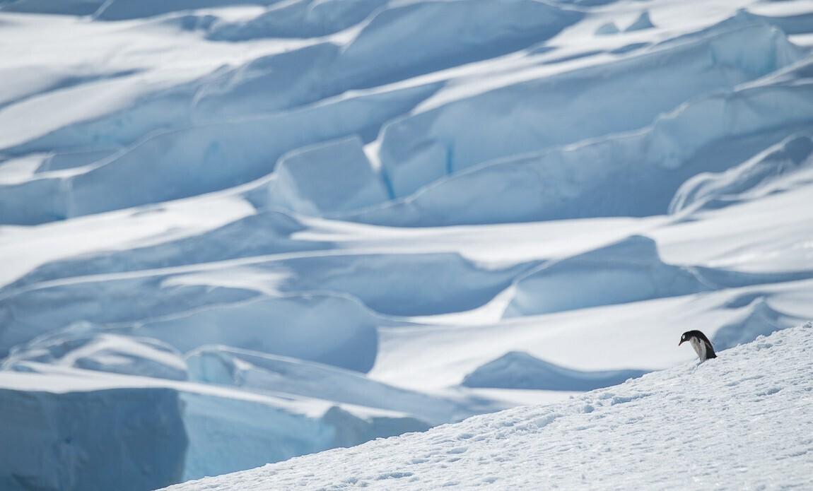 expedition photo antarctique benoist clouet galerie 11