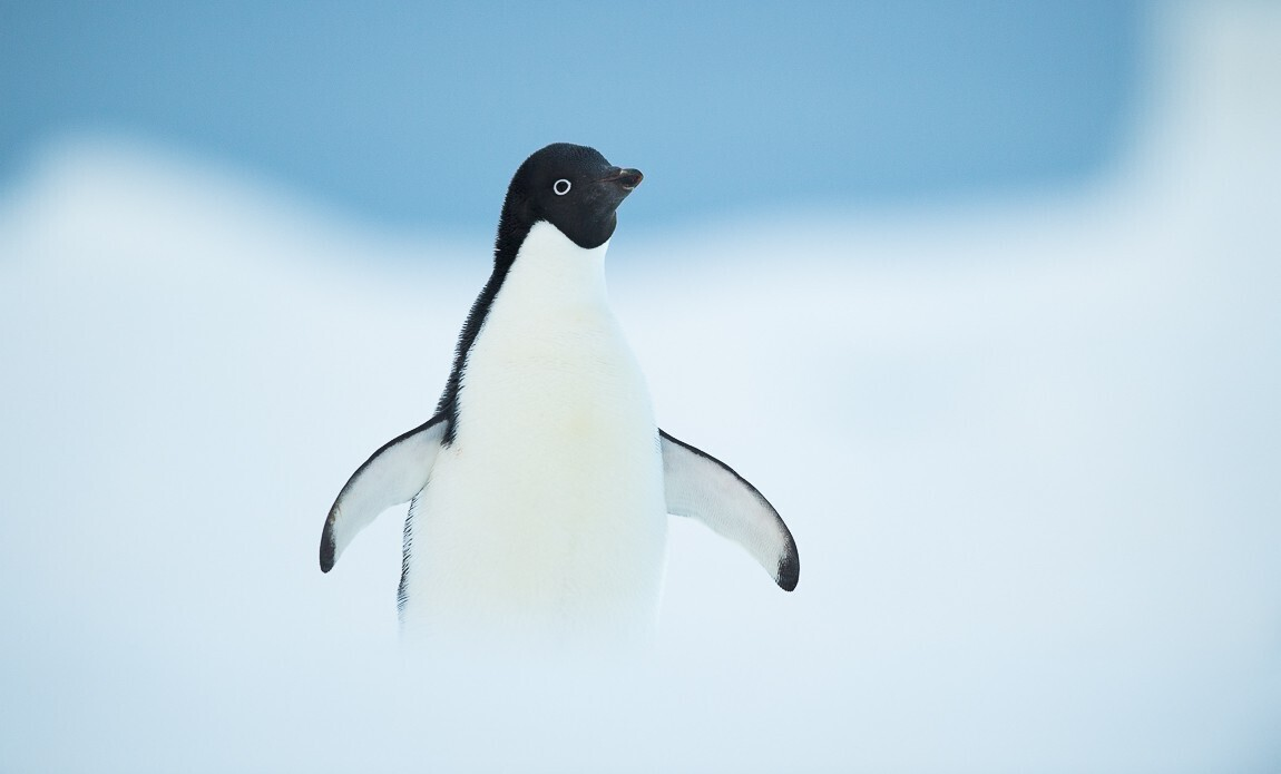 expedition photo antarctique benoist clouet galerie 12