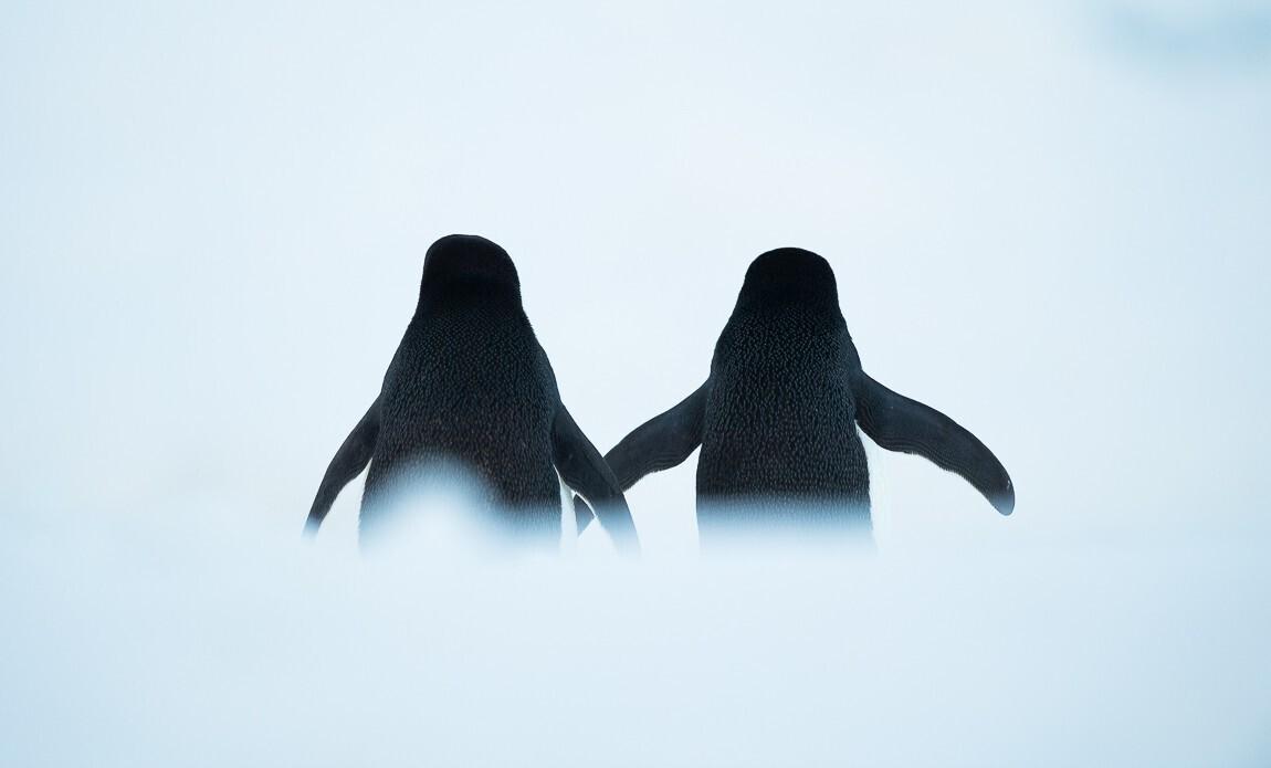 expedition photo antarctique benoist clouet galerie 13