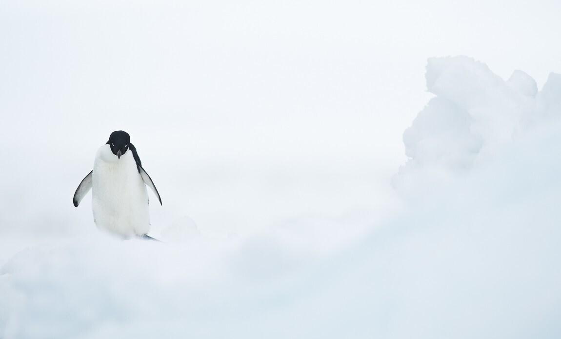 expedition photo antarctique benoist clouet galerie 3