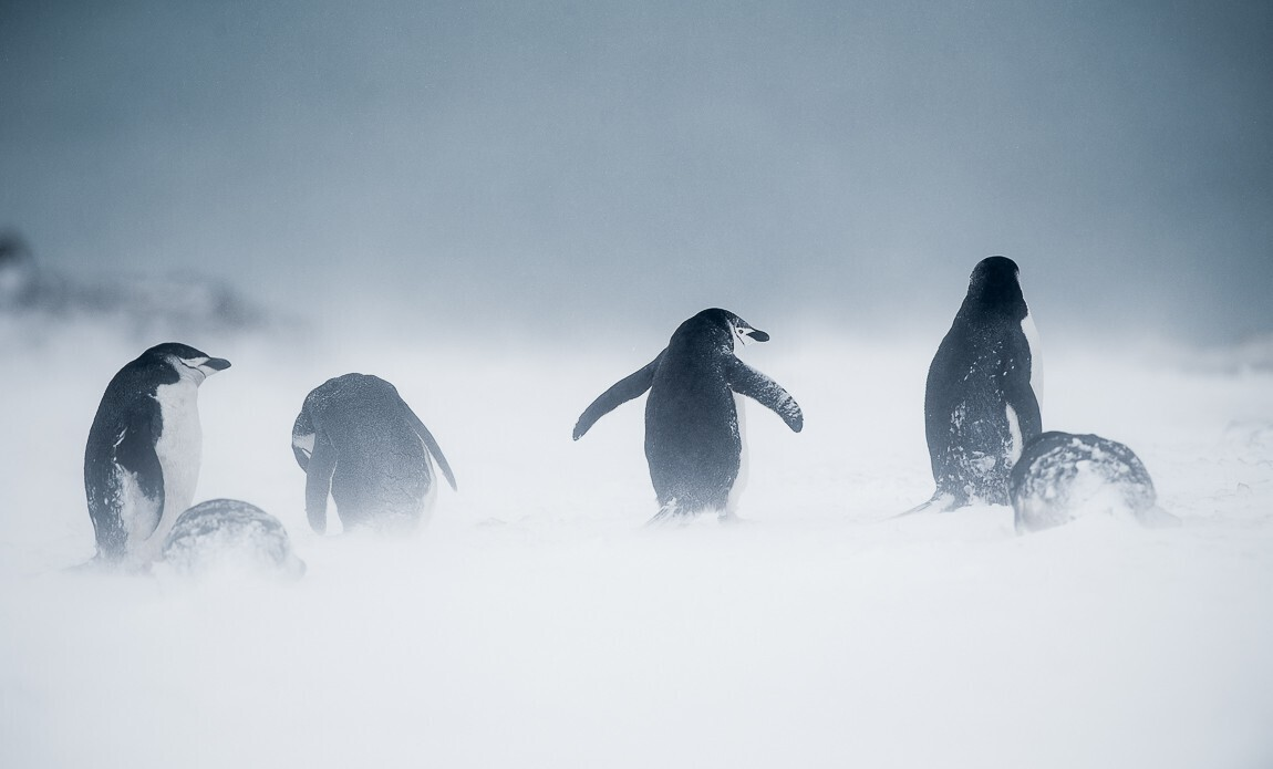 expedition photo antarctique benoist clouet galerie 6