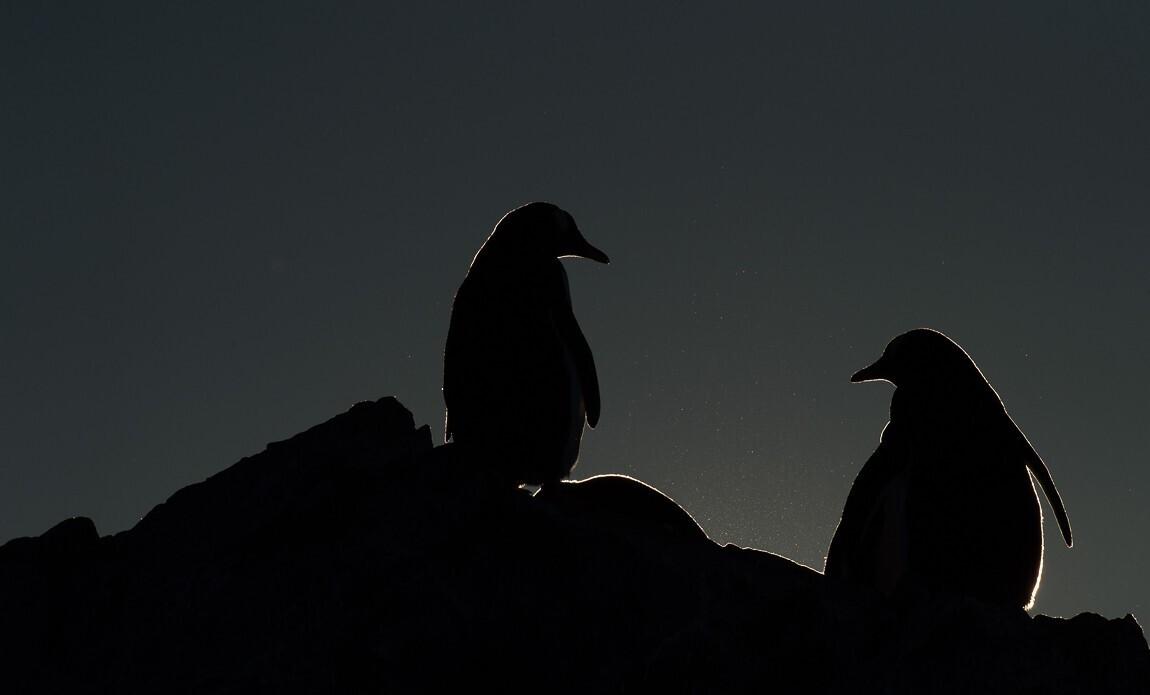 expedition photo antarctique benoist clouet galerie 9