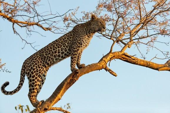 safari photo botswana mathieu pujol promo 1 jpg