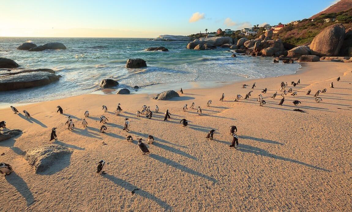 voyage photo afrique du sud vincent frances galerie 5