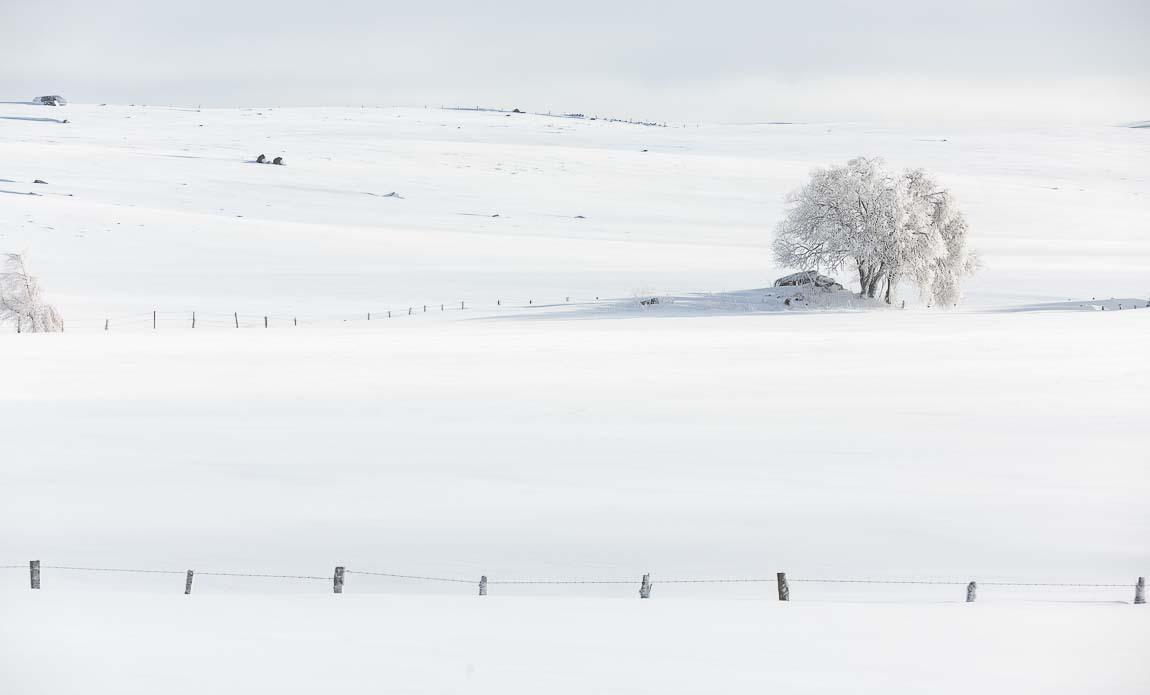 voyage photo aubrac hiver lionel montico galerie 2