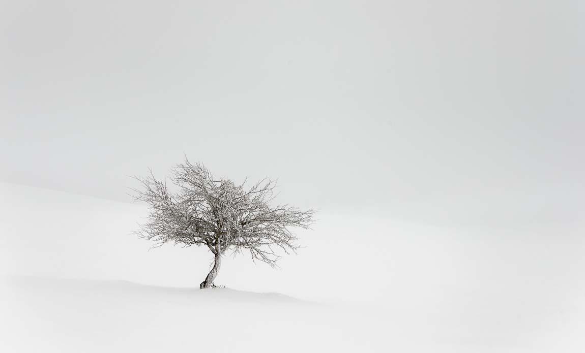 voyage photo aubrac hiver lionel montico galerie 4