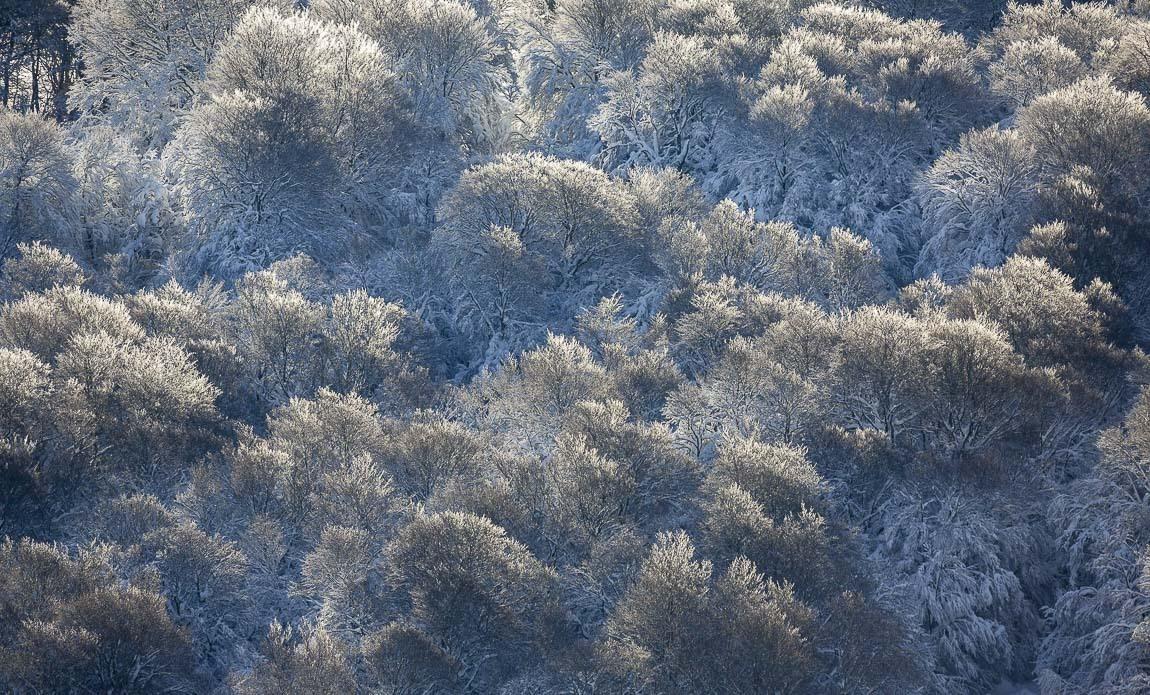 voyage photo aubrac hiver lionel montico galerie 9