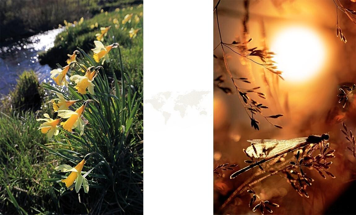 voyage photo aubrac printemps jean luc girod galerie 6