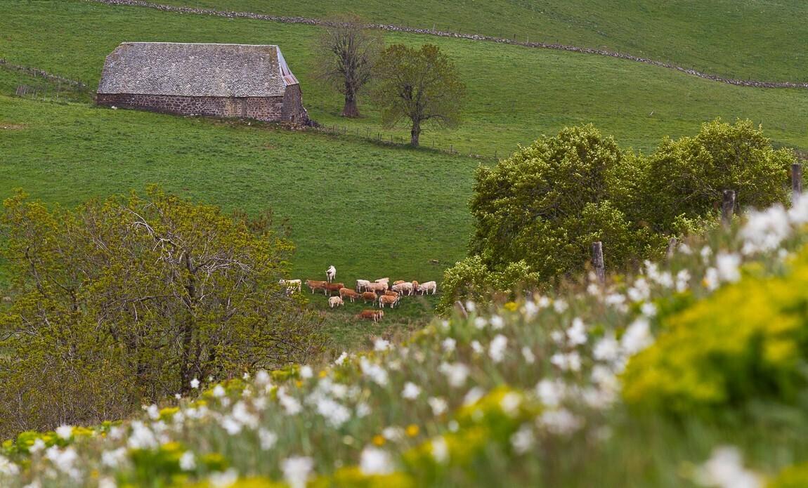 voyage photo aubrac printemps lionel montico galerie 8