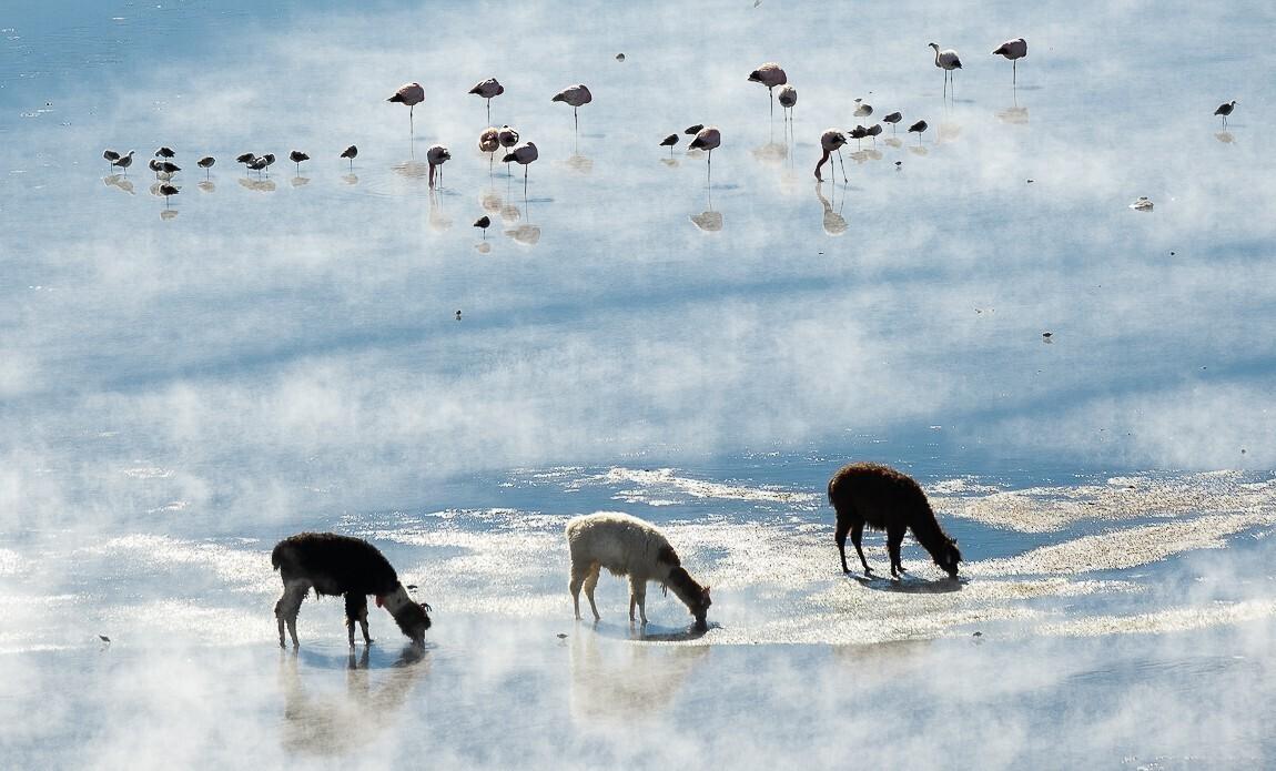 voyage photo bolivie hiver jean michel lenoir galerie 3