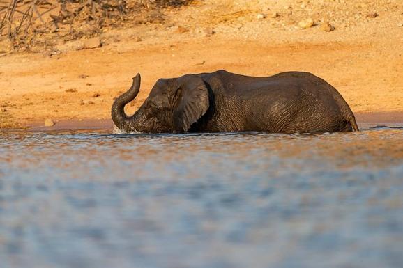 voyage photo botswana mathieu pujol promo 10