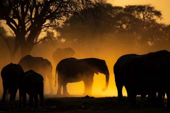 voyage photo botswana mathieu pujol promo 3