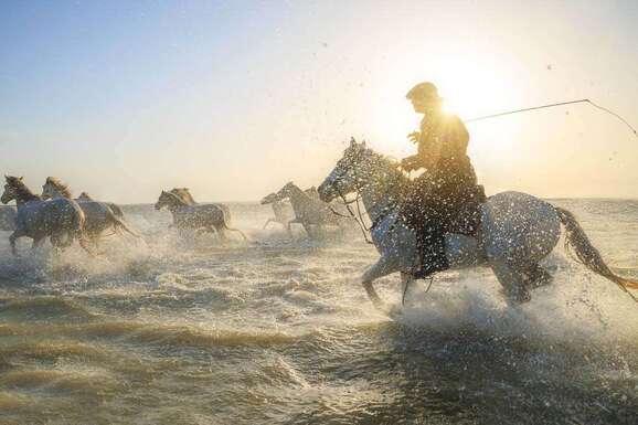voyage photo camargue vincent frances promo 16