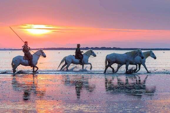 voyage photo camargue vincent frances promo 5