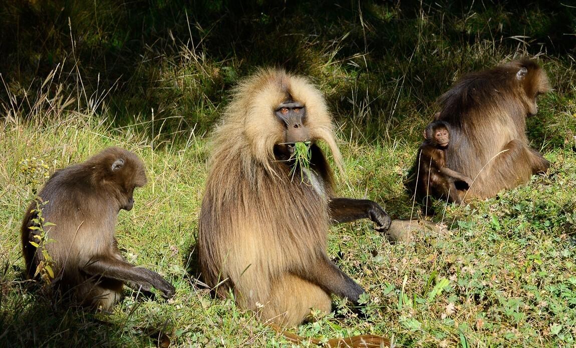 voyage photo ethiopie meskel christophe boisvieux galerie 23