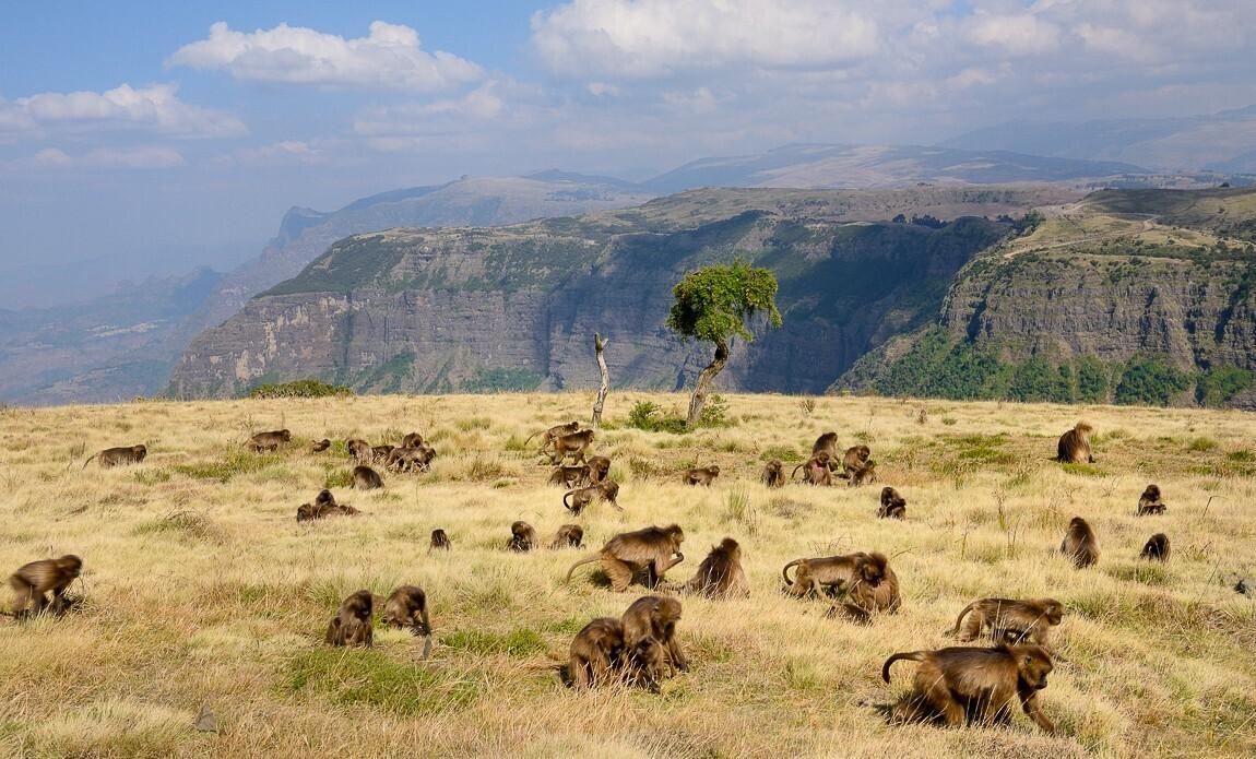 voyage photo ethiopie meskel christophe boisvieux galerie 9