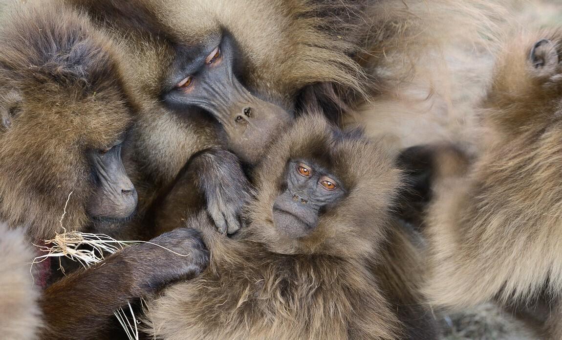 voyage photo ethiopie timkat christophe boisvieux galerie 31