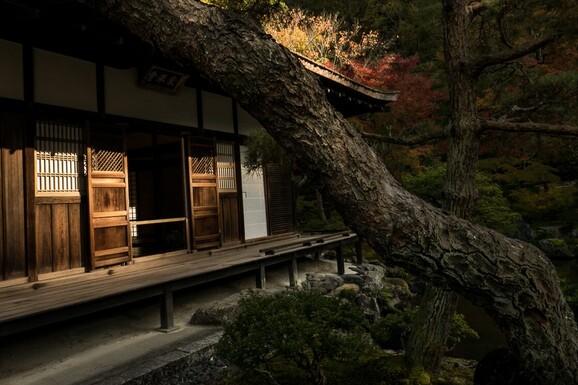 voyage photo japon automne regis defurnaux promo 3 jpg