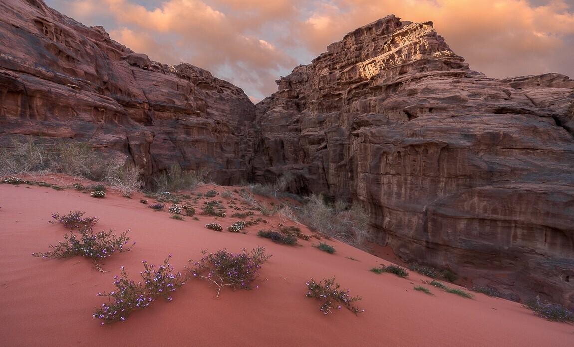 voyage photo jordanie thibaut marot galerie 10