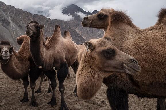 voyage photo ladakh regis defurnaux promo 1 jpg
