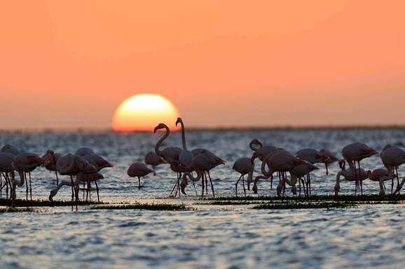 voyage photo namibie vincent frances promo 7
