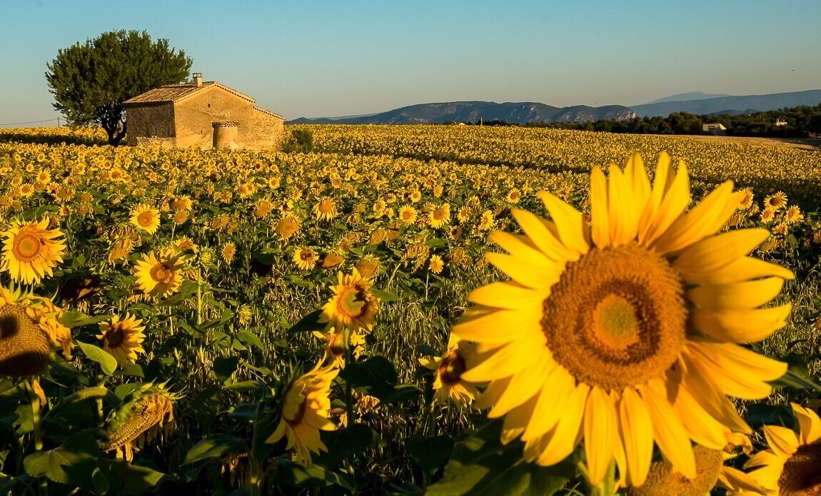 voyage photo provence automne vincent frances galerie 2