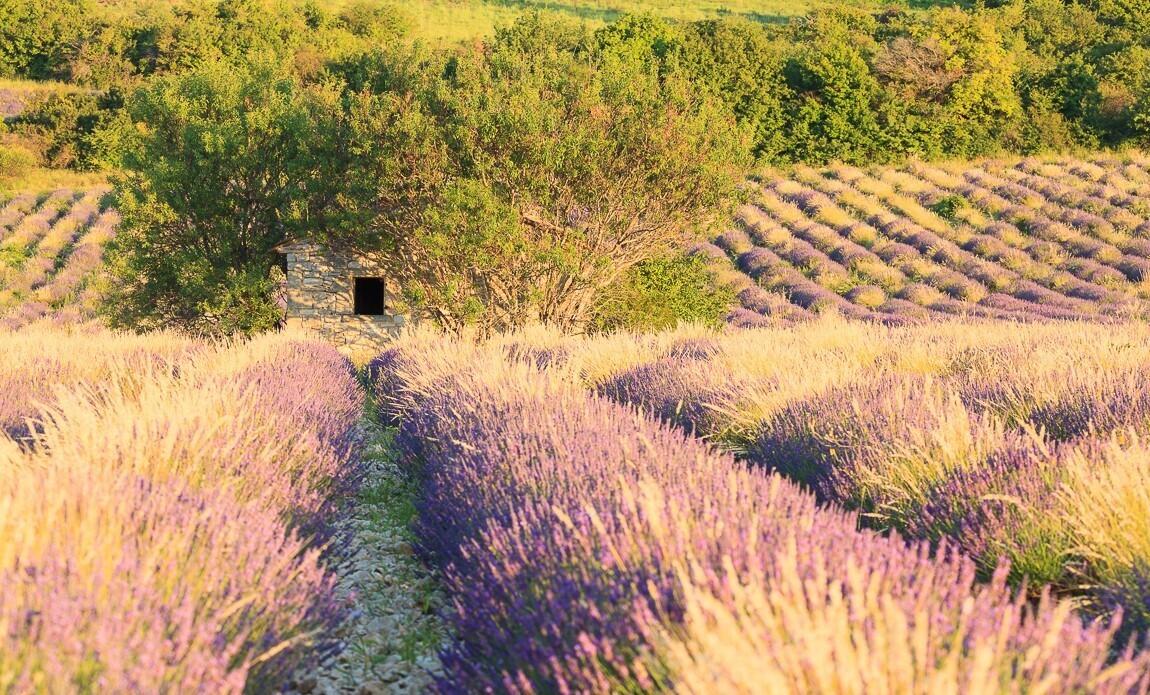 voyage photo provence automne vincent frances galerie 25