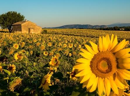 voyage photo provence automne vincent frances promo general 5