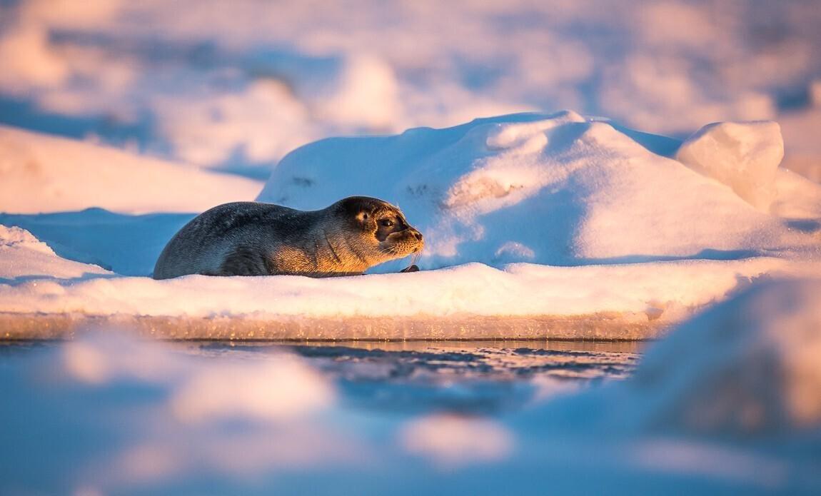 voyage photo spitzberg hiver benoist clouet galerie 10