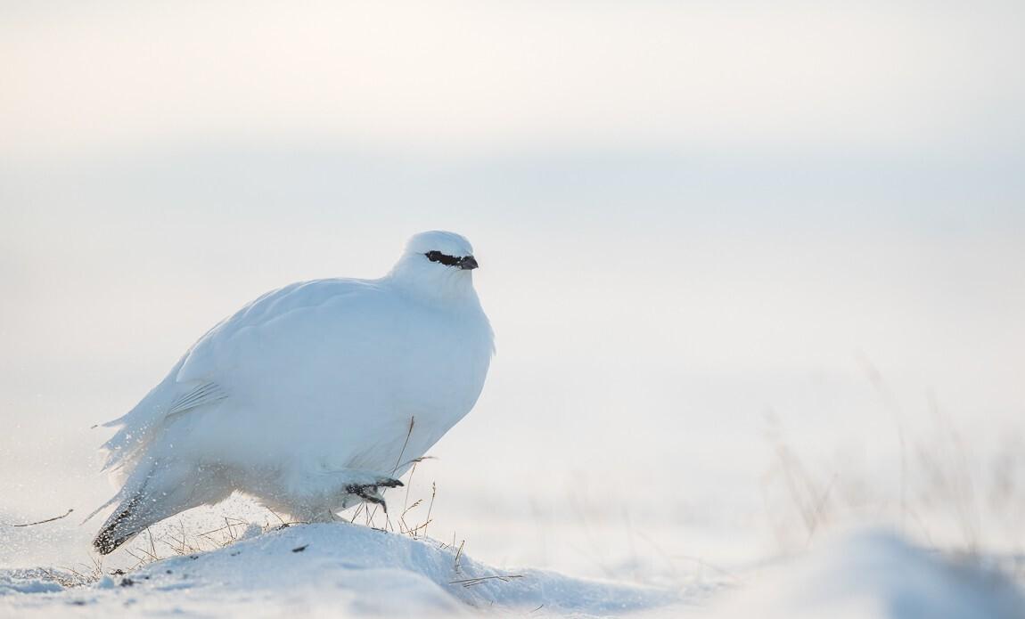 voyage photo spitzberg hiver benoist clouet galerie 18