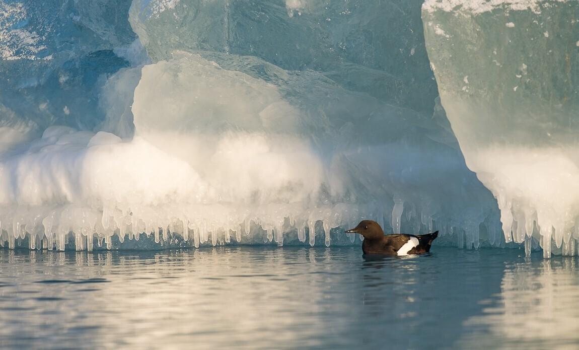 voyage photo spitzberg hiver benoist clouet galerie 9