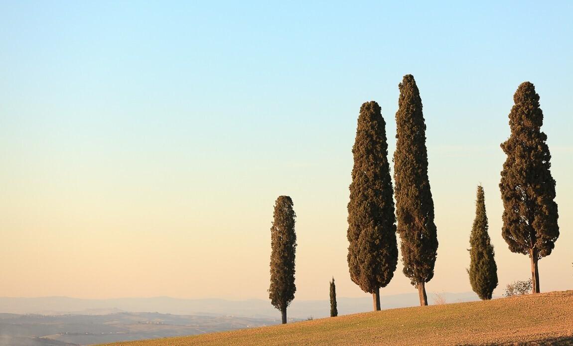 voyage photo toscane printemps vincent frances galerie 14
