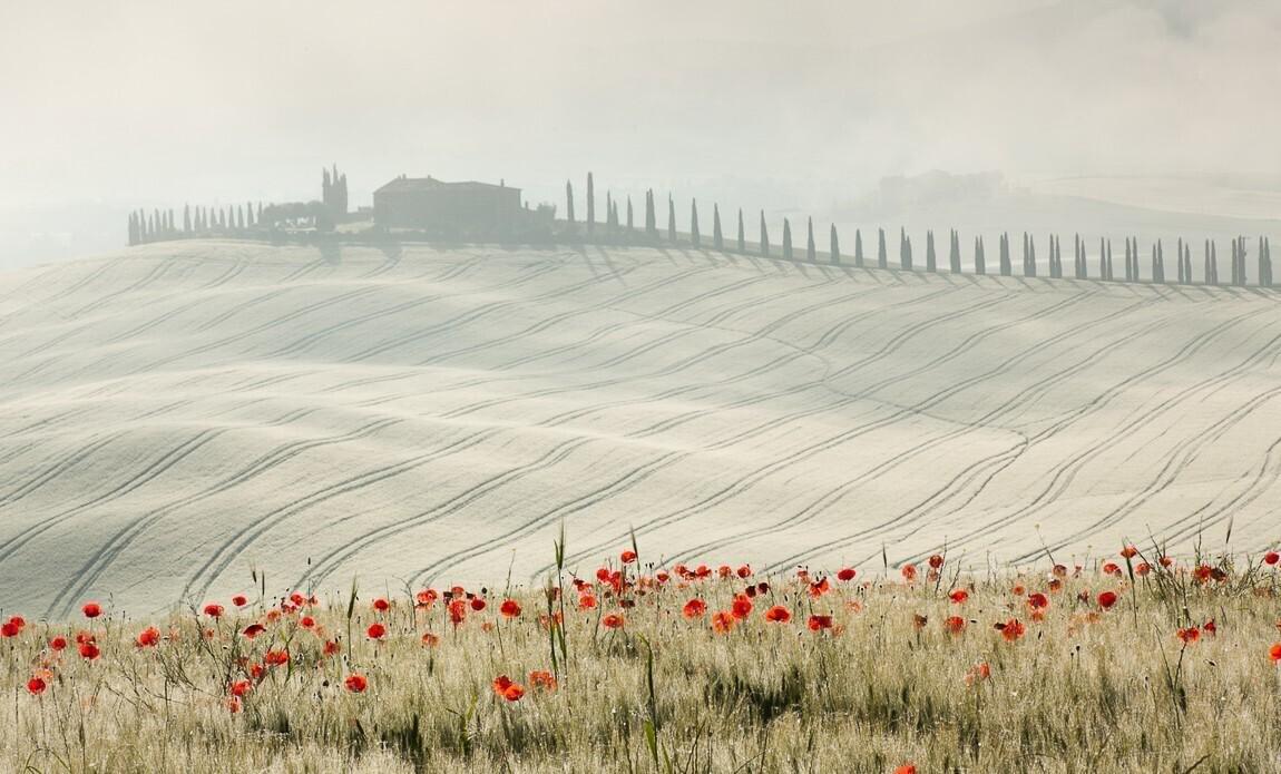 voyage photo toscane printemps vincent frances galerie 49