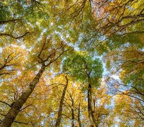 voyage photo automne mathieu pujol mini
