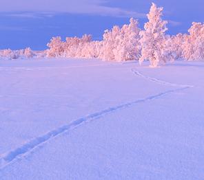 voyage photo etendues arctiques vincent frances mini