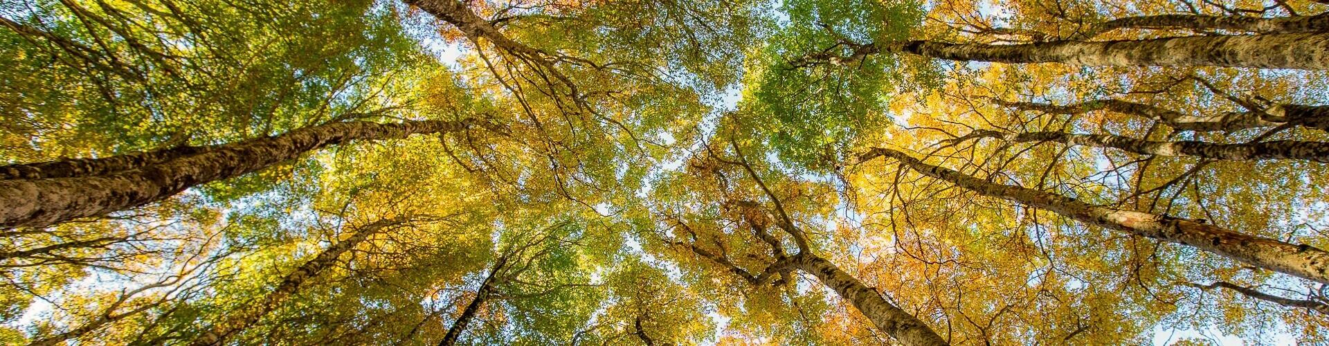 voyage photo automne mathieu pujol header