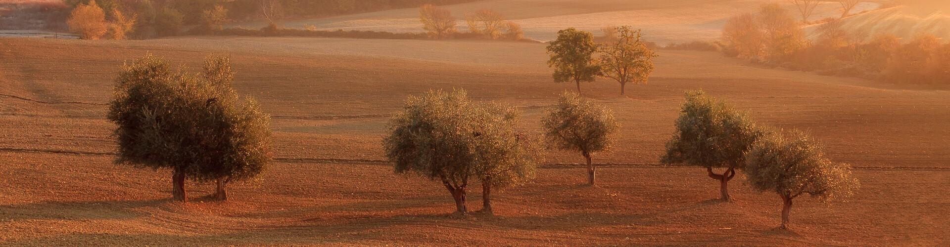voyage photo couleurs automne vincent frances header