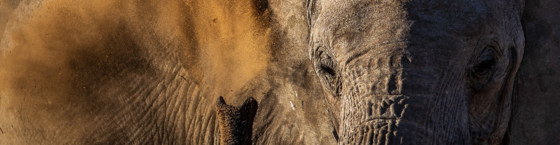 voyage photo safari animalier mathieu pujol header